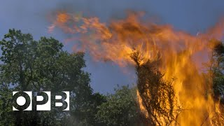 Solving the mysteries of how wildfires spread