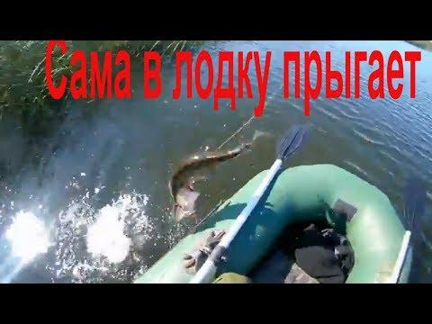 Рыбалка удалась.Щука сама в лодку прыгает.