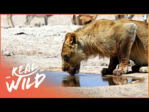 Makadikgadi: Wild Animals Of Botswana | [Predators And Preys Documentary] | Wild Things