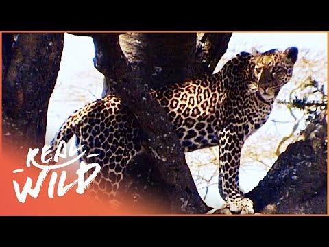 Makadikgadi: Wild Animals Of Botswana  Predators And Preys Documentary  Wild Things