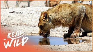 Makadikgadi: Wild Animals Of Botswana | [Predators And Preys Documentary] | Real Wild