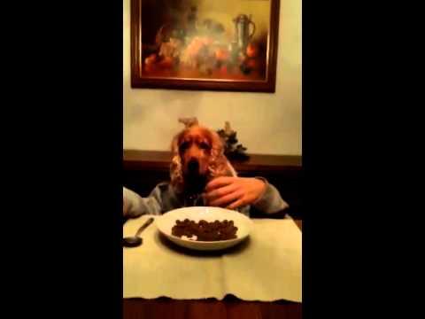 hund isst am tisch dog dining cocker spaniel youtube. Black Bedroom Furniture Sets. Home Design Ideas