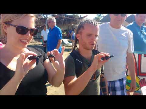 30-10-2017 - Norwegian Cruise - Acapulco City Tour & Baby Turtle Release by Rudy