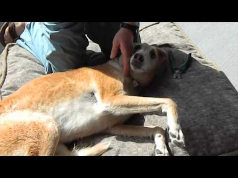 Dr. Murray Matheson, Veterinarian: How to Cut your Dogs Nails