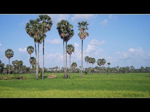 ĐI XE MÁY DU LỊCH CAMBODIA | REVIEW GIAO THÔNG – XE CỘ – ĐƯỜNG XÁ – SỰ SỐ   [#1]