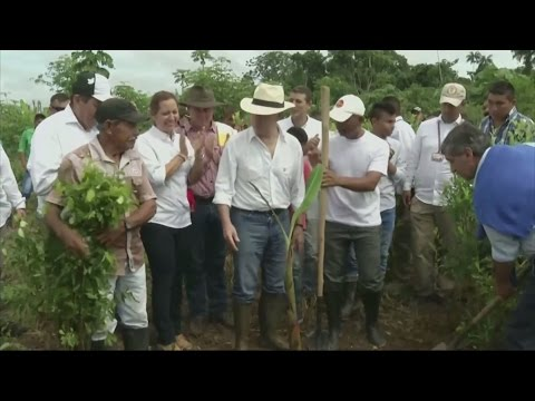 Colombia launches initiative to end coca production