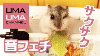【 うまうまチャンネル 】 音フェチの飼い主が作成した自己満動画です。...