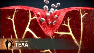 Испытание сверхнагрузкой | Приключения тела