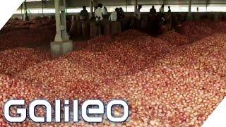 Darum sind Zwiebeln in Indien so beliebt | Galileo | ProSieben