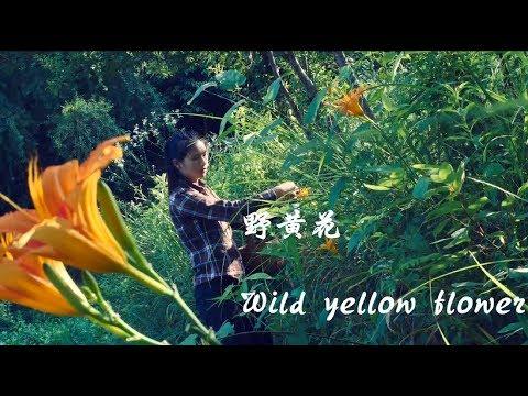 野生的黄花在深山里盛开,做成食物才能不辜负大自然的馈赠