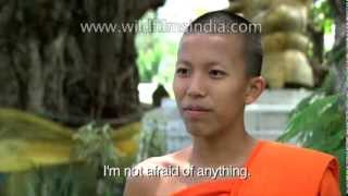 The Ladyboys of Thailand