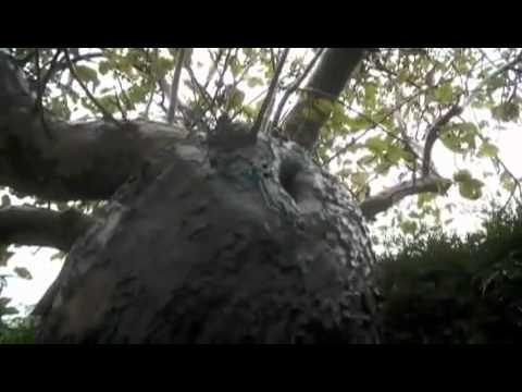 elfe, fée élémentaux réels filmé dans la nature.flv