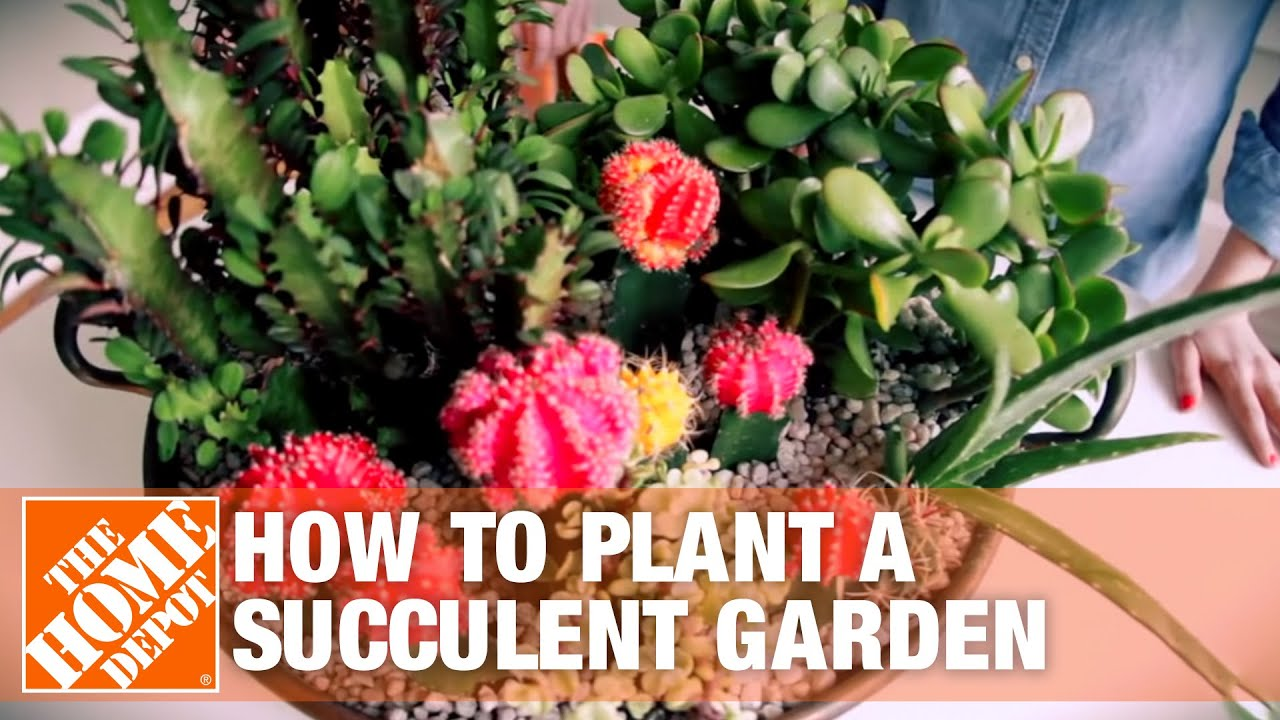 succulent container gardens tips and tricks youtube. Black Bedroom Furniture Sets. Home Design Ideas