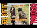 Sp Putri Gembala Suara Walet Rumah Walet  Mp3 - Mp4 Download