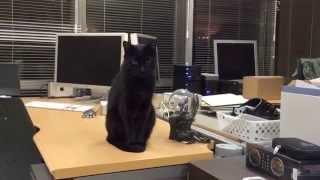 Black cat sitting and thinking