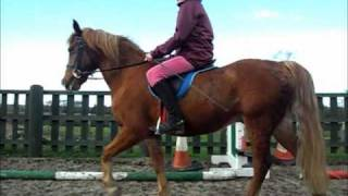 Mina And Spud. Jumping Lesson  27/2/11