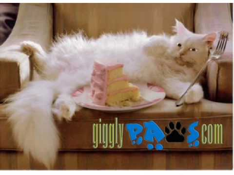 Cat Steals Birthday Cake Funny Cat Video Clip Online Birthday E