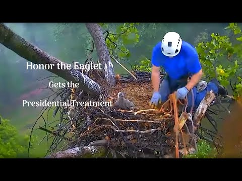 DC4 Rescued from DC Eagle Cam Nest