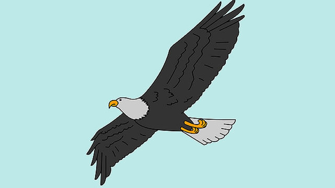 Superb How To Draw A Bald Eagle For Kids