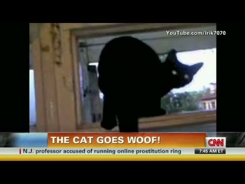 CNN: Cat barks until busted, then meows