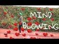 Mind Blowing Video Song veerey ki wedding Mika Singh Pulkit Samrat Jimmy