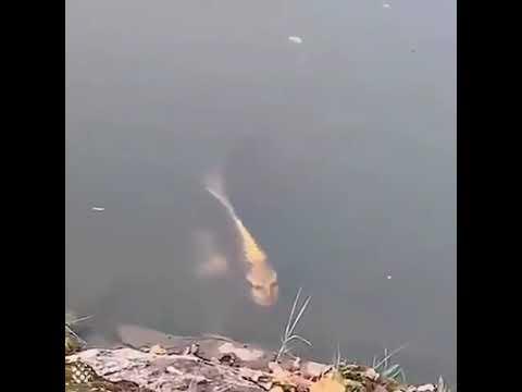 Un poisson au « visage humain » effraie la toile