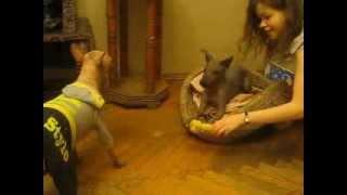 видео собаки лают