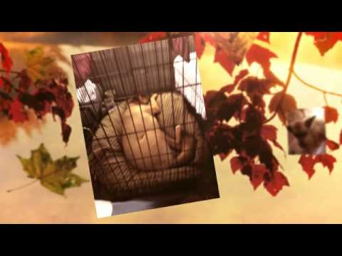 Nov 2012  Tennessee to Maryland -  Prestigious Pet Transport