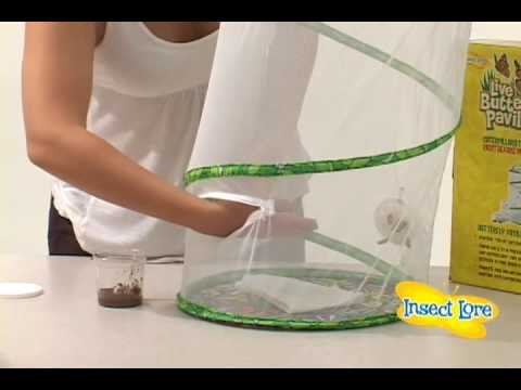 Insect lore butterfly pavilion instructions youtube for Net making instructions