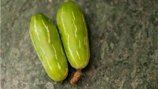 Coccinea Grandis / Perennial Cucumber / Ivy Gourd