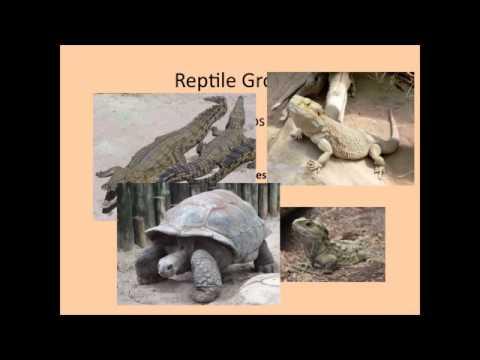 Vertebrate Evolution Part 2