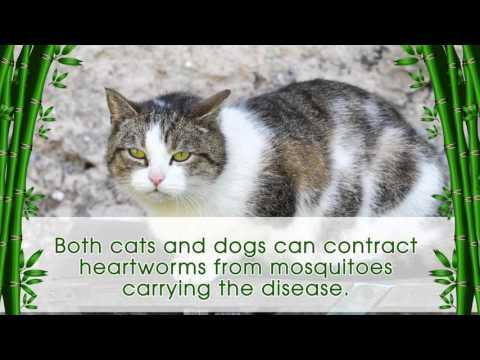 Pet Health Heartworm Disease - Prevention is Key!