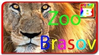 Zoo Brasov. Invatam animalele domestice si salbatice impreuna cu Bogdan`s Show