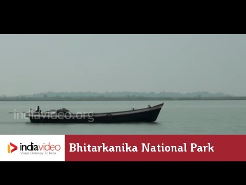 Endangered Crocs at Bhitarkanika National Park, Odisha