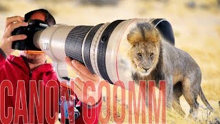 Canon 600mm f/4 IS: BEST Lens for WILDLIFE Photography?