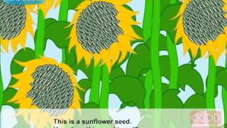 How do seeds travel (Video Lesson)