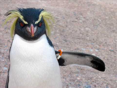 Dansul Pinguinului by Radio Zu (PARLAMENT)
