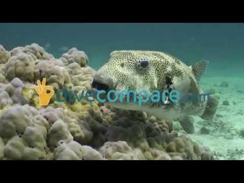 Scuba Diving Koh Lanta, Thailand | Dive Compare