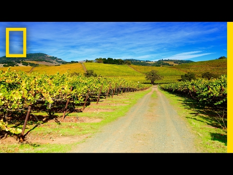 Photo Walk in Napa Valley | National Geographic