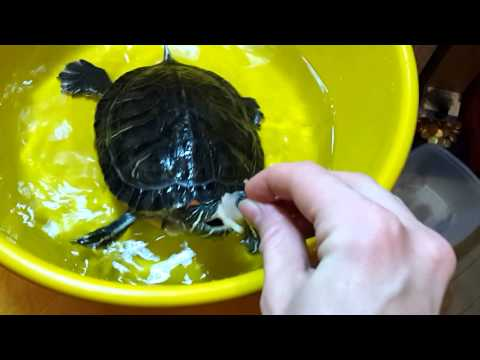 Черепахи -