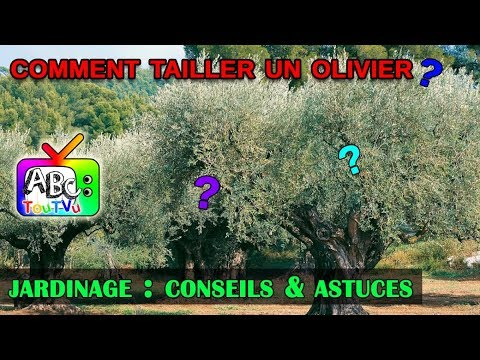 Comment tailler un olivier? - YouTube