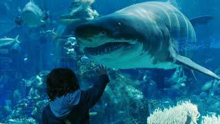 Aquaman Tamil | Arthur Talking To Fish Tamil Scene | Aquaman Tamil Scene