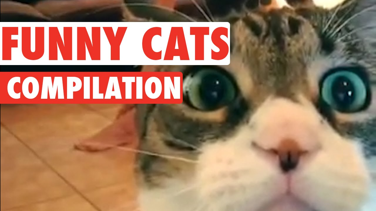 Funny Cats Video Compilation 2016 Youtube