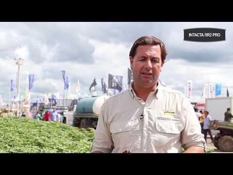 #Protagonistas Claudio Del Vecchio: ¿Qué variedades INTACTA siembra y qué manejo tiene?