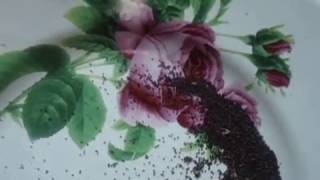 Сеем петунию  ПОВТОРЯЙ ЗА МНОЙ! Видео урок от Ольги Черновой начинающим садоводам   огородникам  19