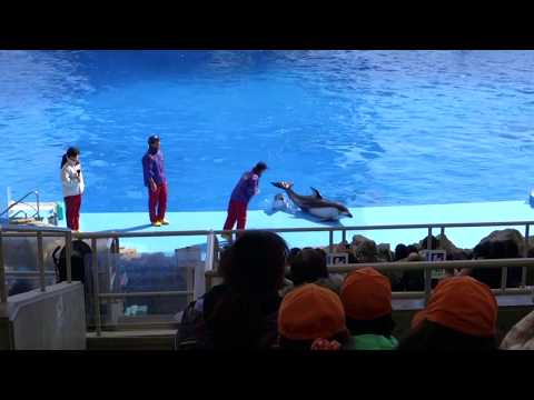 Port of Nagoya Aquarium Dolphin Show