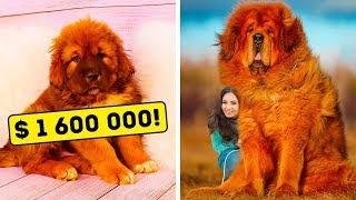 正しい子犬の選び方。 世界には340の犬種がいると言われ、犬種によっ...
