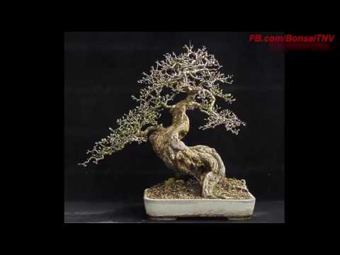 Bonsai works of genius artists