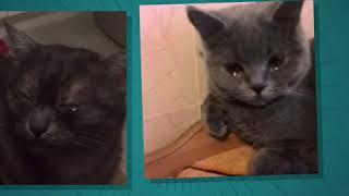 Кот из гта7 классный кот уходит из ютуба
