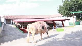 VIDEO BEHOBIA